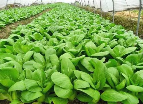 丁小强赴嘉鱼调研蔬菜产业  强调推动高质量发展