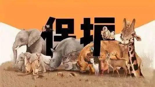 """咸宁市发布""""禁捕令""""5年内禁止猎捕陆生野生动物"""