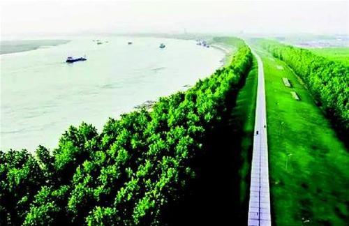 2020年咸宁市完成长江沿岸造林1.75万亩