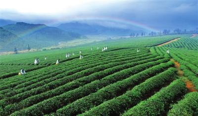 王远鹤在赤壁市调研时要求  办好茶产业发展大会