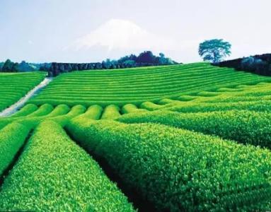 推进绿色崛起战略赤壁市特色农业融入双循环