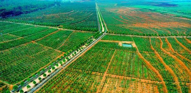 咸宁市2021年国土绿化现场推进会在通山县召开